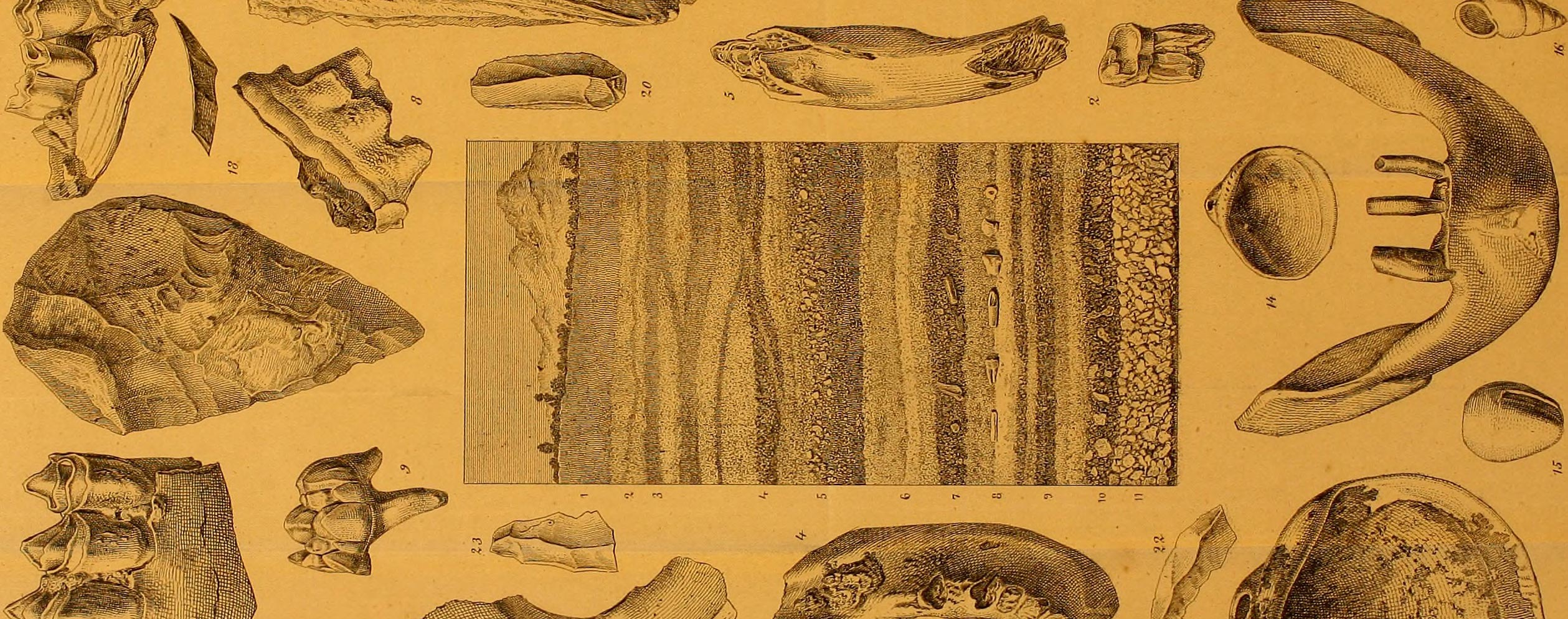San Ysidro Cut. Human remains and axes, etc. Illustration by Kraus from Volume 1 of Anales de Historia natural, 1872.